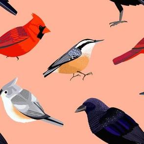 birds2 coral