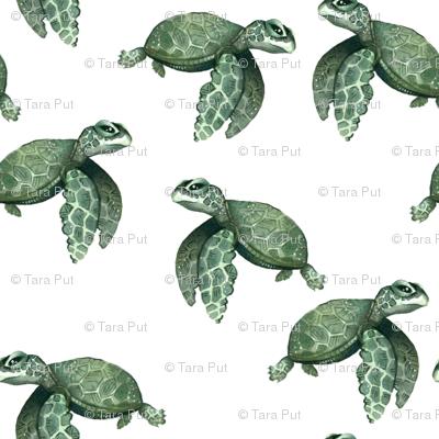 Quiet Sea Turtles - Larger Scale