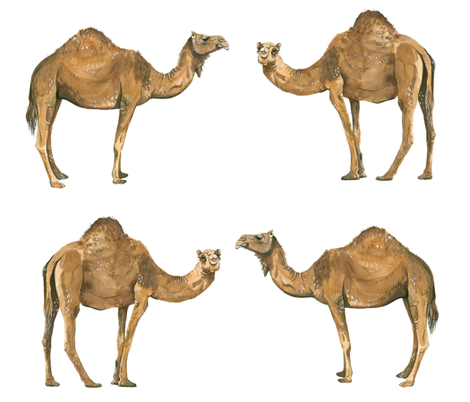 Camel Pals - Larger Scale fabric by taraput on Spoonflower - custom fabric