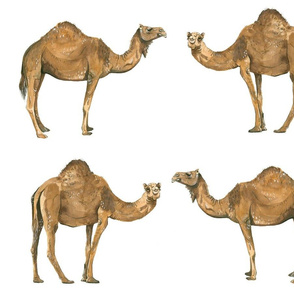 Camel Pals - Larger Scale