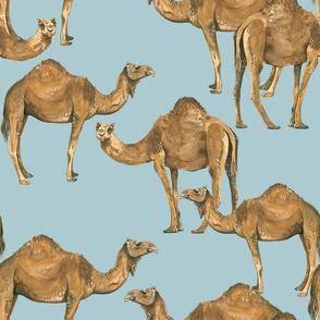 Camels on Blue - Larger Scale