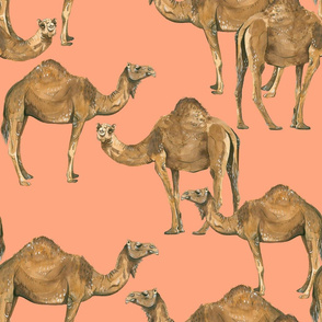 Camels on Salmon - Larger Scale