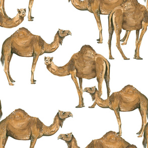 Camels on White - Larger Scale