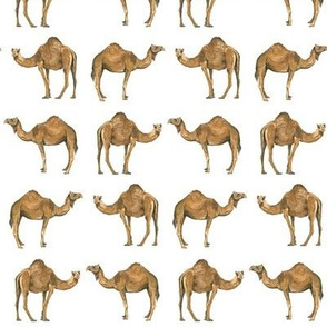 Camel Pals - Smaller Scale