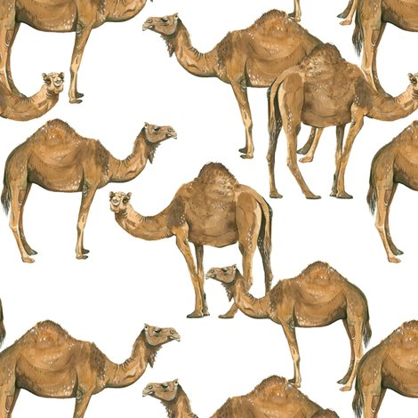 Rrcamels-on-white_shop_preview