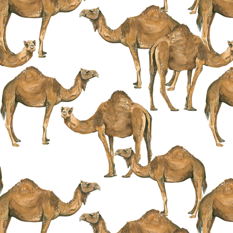 Camels on White - Smaller Scale fabric by taraput on Spoonflower - custom fabric