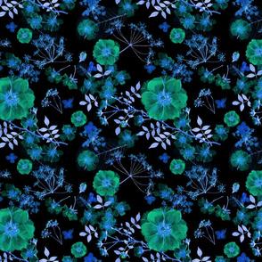 Midnight Blue Rose Garden