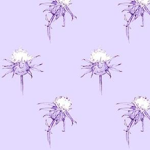 Lavender Milk Thistle
