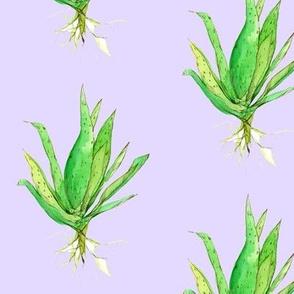 Aloe Vera Lavender