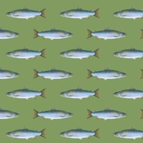 small coho salmon on vintage green