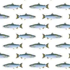 small coho salmon on white