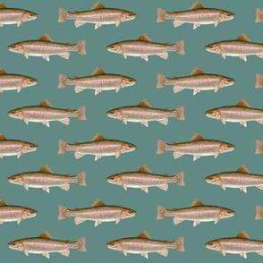 small rainbow trout on slate blue