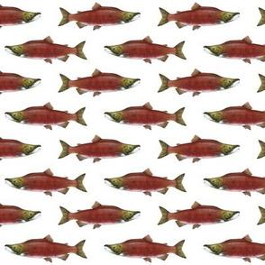 small sockeye salmon on white