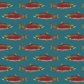 small sockeye salmon on deep teal green