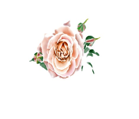 Rose_shop_preview