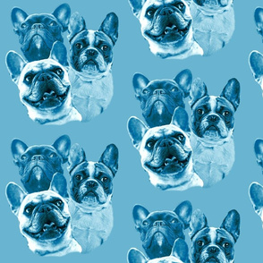 aqua frenchies fabric