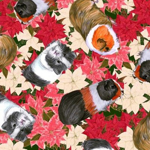 3 Guinea Pigs on lots of Poinsettia