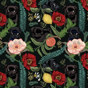 Botanical and Black Pugs