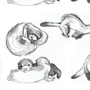 ferret kits love