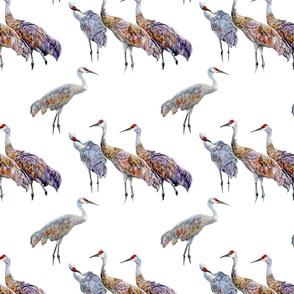 Sandhill Cranes Small