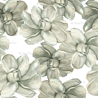 White Flowers on White - Large Scale