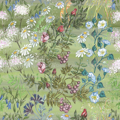 Hand-drawn Wild Flowers on Meadow