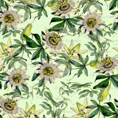 "18"" White Passionflowers on  green"