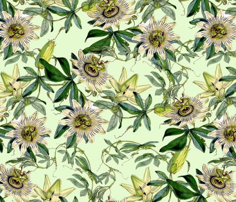 "18"" White Passionflowers on  green fabric by utart on Spoonflower - custom fabric"