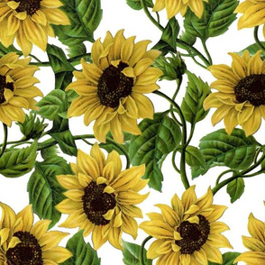 "10"" Sunflowers on White"