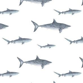 shark in watercolor ocean theme / lub by lamb