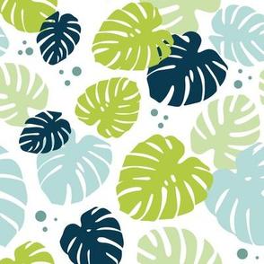 Monstera Leaves on White