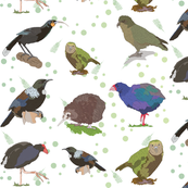 Hand Drawn New Zealand Bird Illustrations.