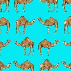 Camel Pals on Turquoise - Small Scale