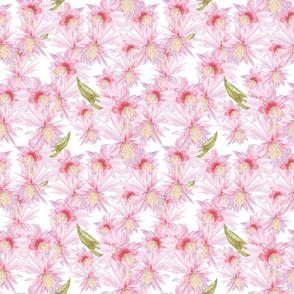 cactus blooms_Melanio_white