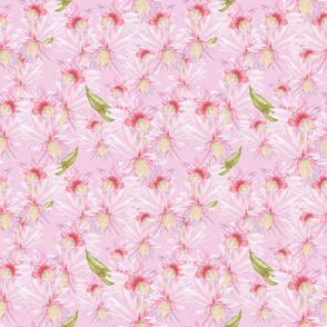 cactus blooms_Melanio_pink