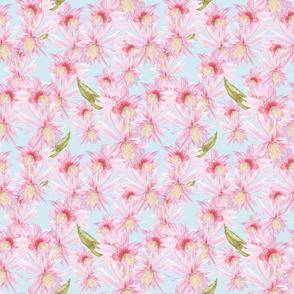 cactus blooms_Melanio_blue