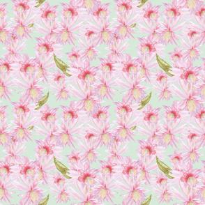 cactus blooms_Melanio_mint