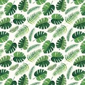Monstera and palm leaves