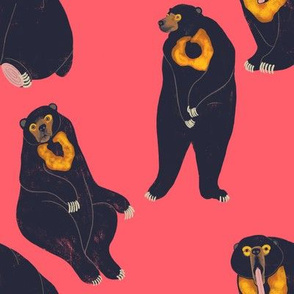 Sun Bears Pink
