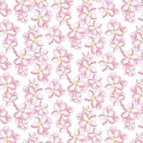 cherry blossoms small_Zeichenflache 1