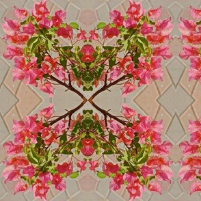 Pink Bougainvillea CrissCross