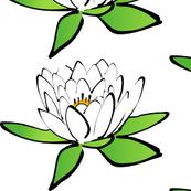 lotus on white