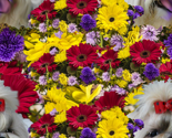 Rrshihtzu-floral2_thumb