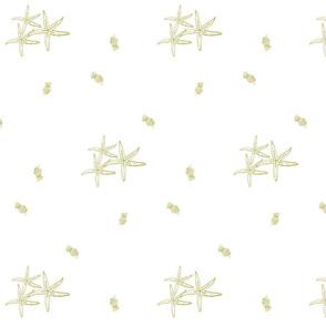 Golden starfish tropics 84