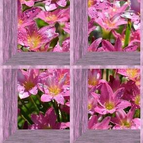 Attic Windows on Crocus Flowers