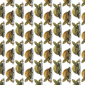 box turtle tea towel