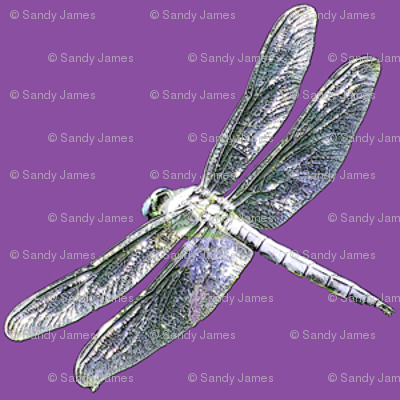 dragonfly on lavender 2x2