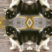 Mapache Puppy