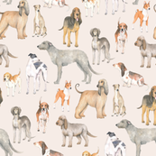Hound dogs on neutral background