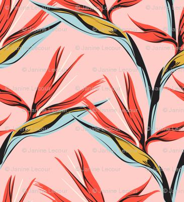 Bird of Paradise -pink